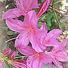 Spring Azaleas  by Darlene Bayne