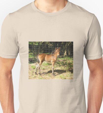 Teddy - English Riding Pony Colt T-Shirt