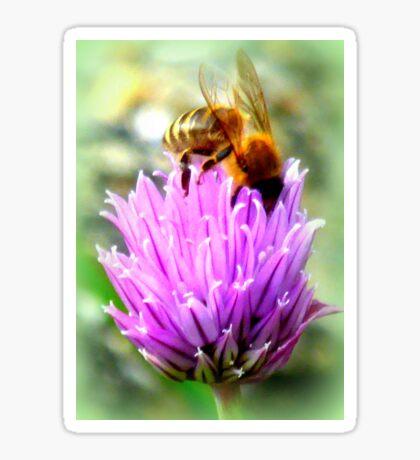 Bee on chive flower Sticker