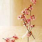 Plum Blossom Still Life by Colleen Farrell