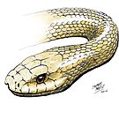 Taipan by SnakeArtist
