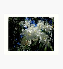 Budding Blossoms Art Print