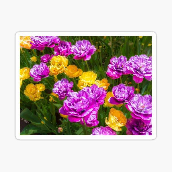 Double Tulips Bright Sticker