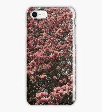 Washington Cherry Blossoms 2 iPhone Case/Skin