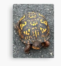 Eastern Box Turtle - Live If you like, please purchase, try a cell phone cover thanks Canvas Print