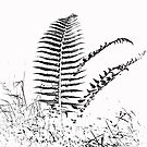 Fern by mikebov