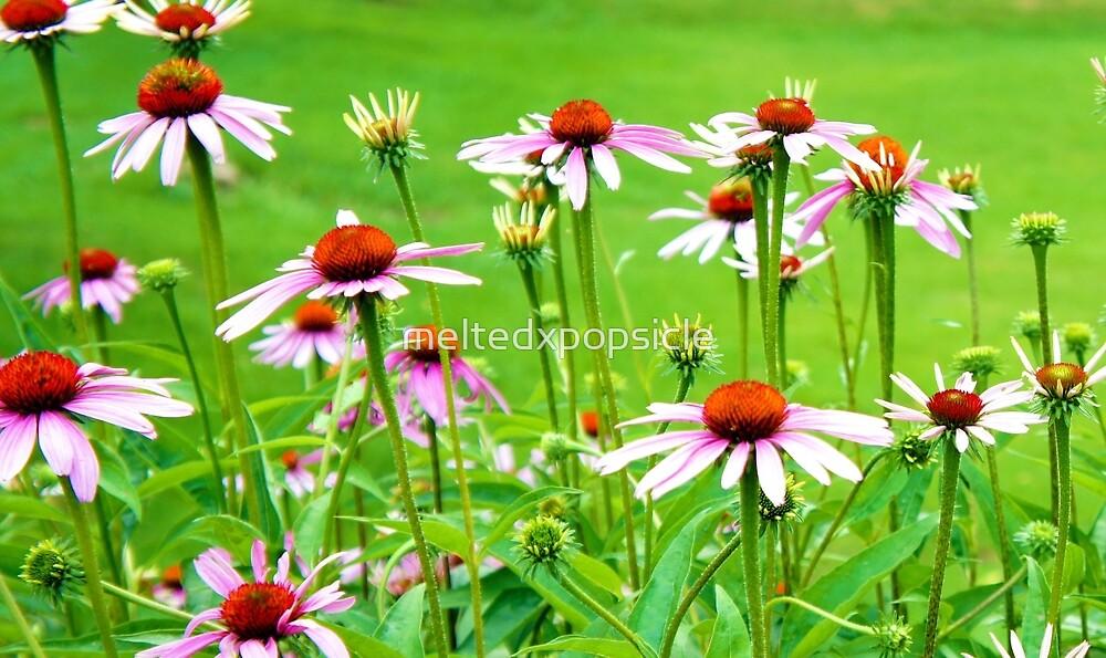 Pink Flowers by Jessica Liatys