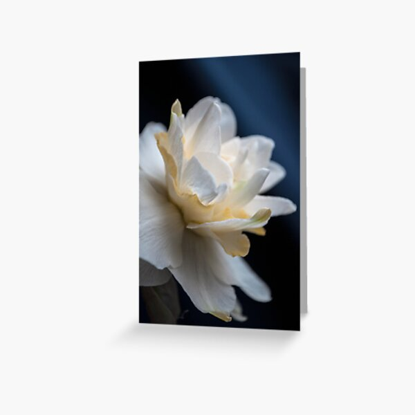 Butter and Eggs Daffodil Greeting Card