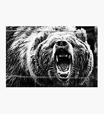 Kodiac Bear Photographic Print