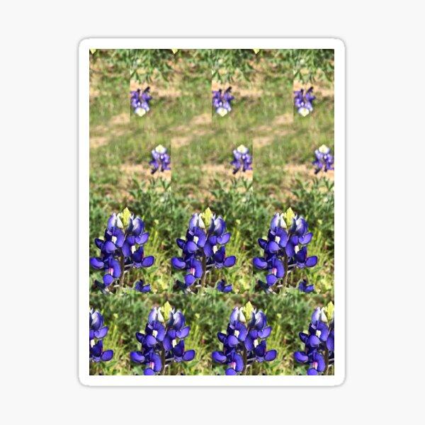 Field of Bluebonnets Sticker