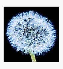 Blue Dandelion Photographic Print