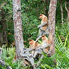 Proboscis Monkey group by Brad Francis