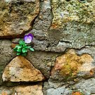 Foundation Flower by Chris King