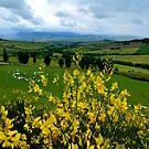 Tuscany Hills by Chris King