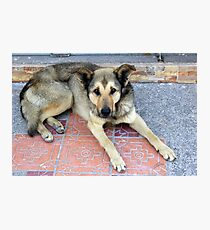 Brown and Black Dog Photographic Print