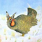 Greater Prairie Chicken by Maryann Harvey