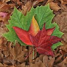 Autumn Leaves by Kym Howard