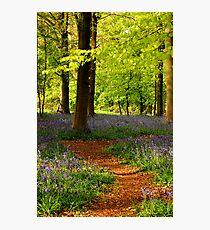 Bluebell path Photographic Print