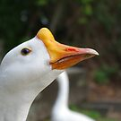 White Goose by sixclawsdragon