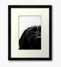 Sniff the Dog.... Framed Print