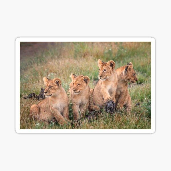 Four cubs Sticker