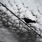 Black Bird by Rebecca Cozart