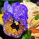 Beautiful Pansy in the Rain by Tori Snow