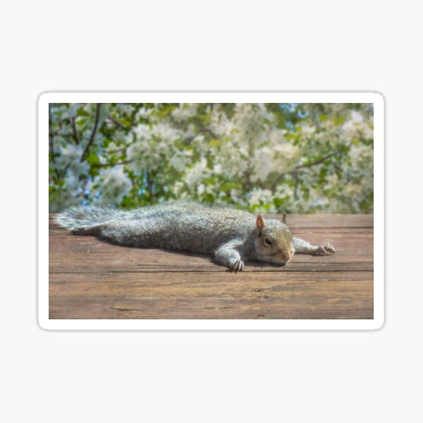 Relax this Spring! Sticker