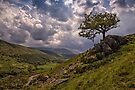 Coming Storm - College Valley, Northumberland by David Lewins
