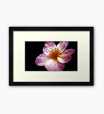 Pink Flower Close-Up Framed Print