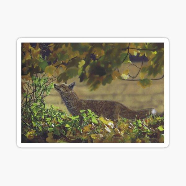 Red Fox in a field Sticker