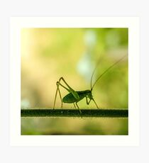 cricket in green  Art Print
