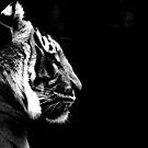 Big Cat No.6 by Erin Davis