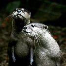 Otters No.3 by Erin Davis