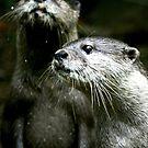Otters No.5 by Erin Davis