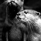 Otters No.6 by Erin Davis