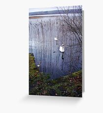 Swans - Ireland     by Denise Sallee Greeting Card