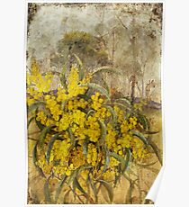 Golden Wattle Poster