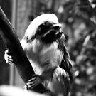Monkey Business No.2 by Erin Davis