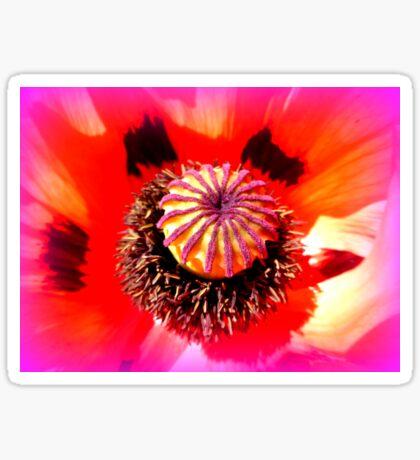 Oriental Poppy Portrait Sticker