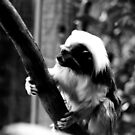 Monkey Business No.4 by Erin Davis