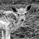 Little Deer No.2 by Erin Davis