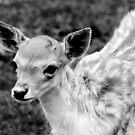Little Deer No.4 by Erin Davis