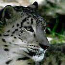 Snow Leopard No.5 by Erin Davis