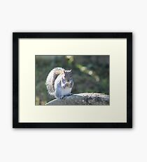 Squirrel On The Stone Framed Print