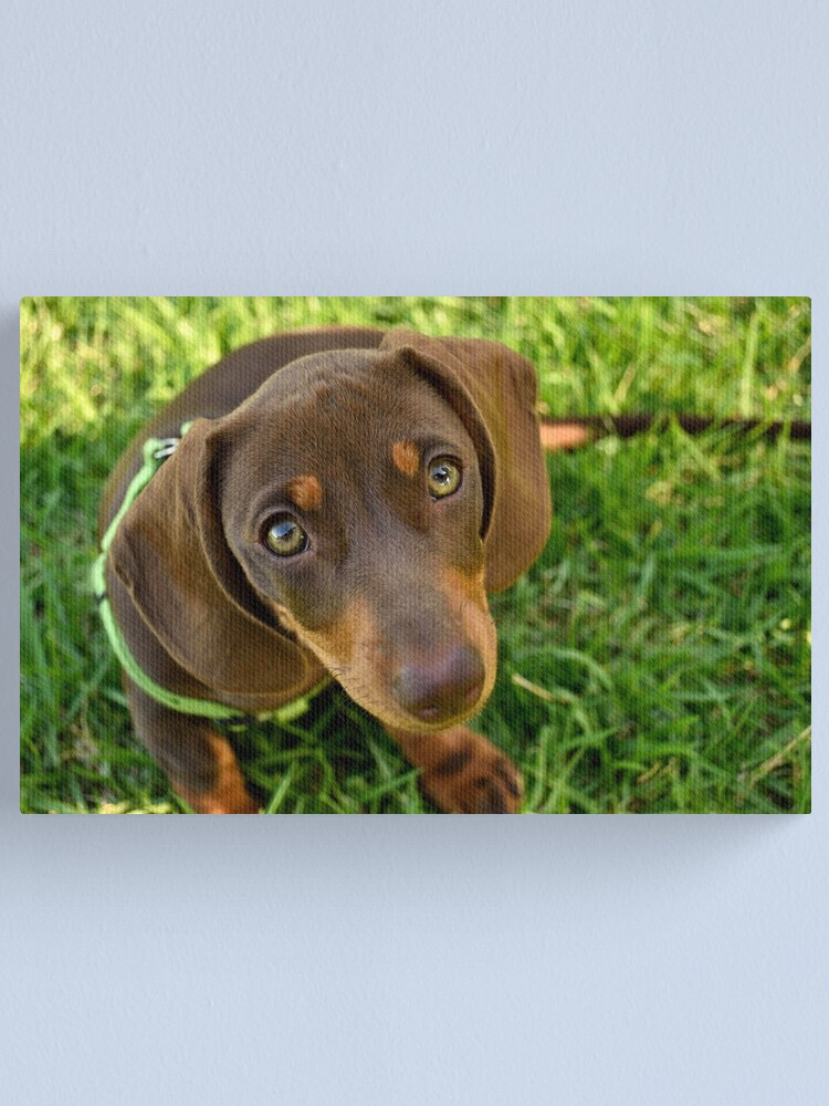 Alternate view of Puppy Face! Canvas Print