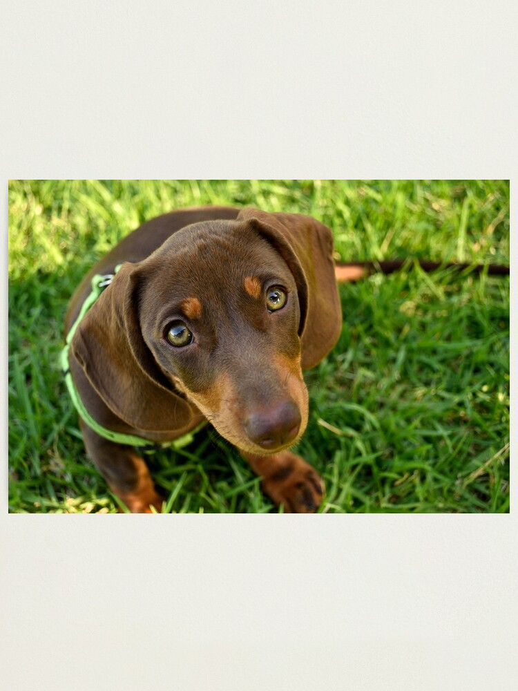 Alternate view of Puppy Face! Photographic Print