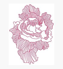 Flower Outline - Red Photographic Print