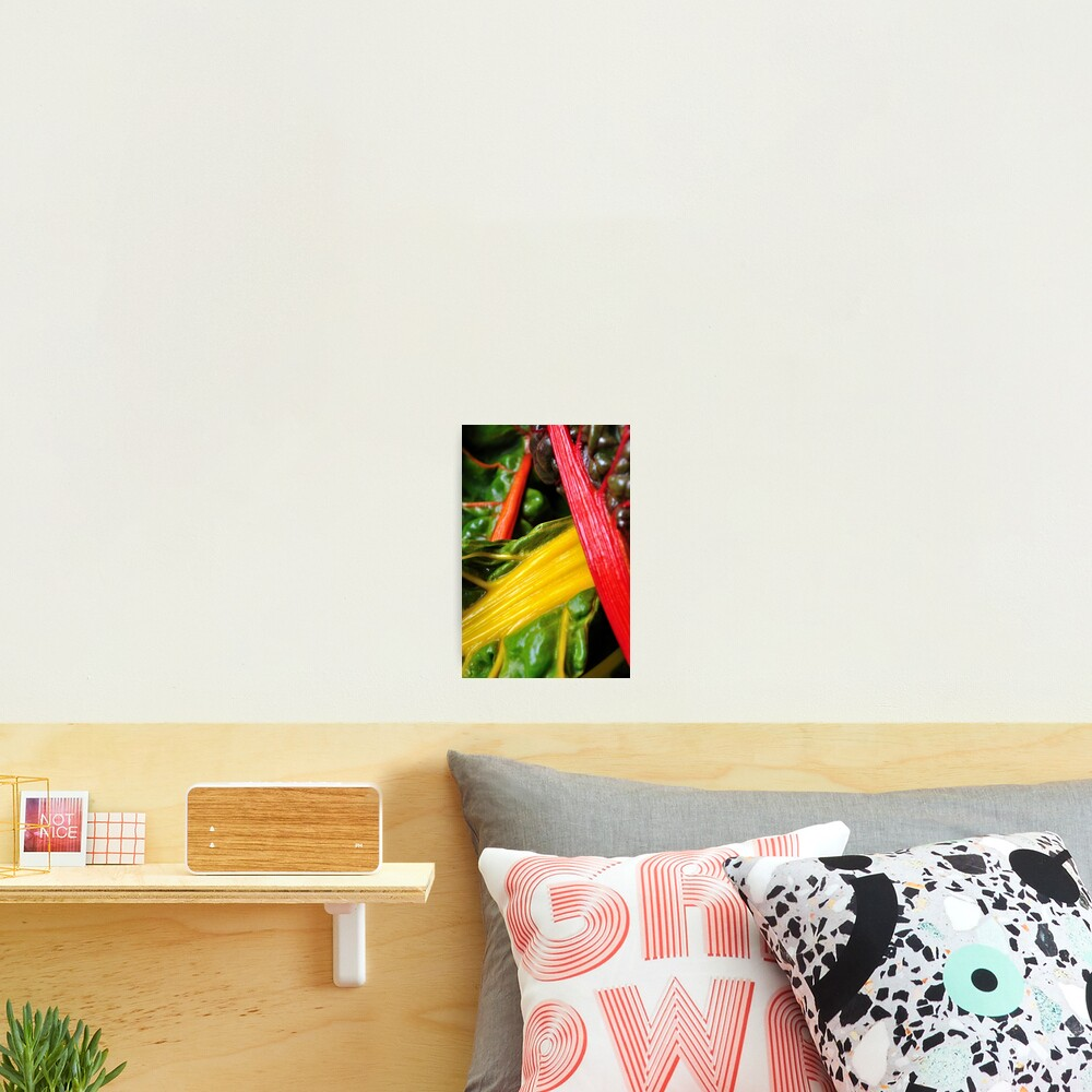 Colourful Greens Photographic Print