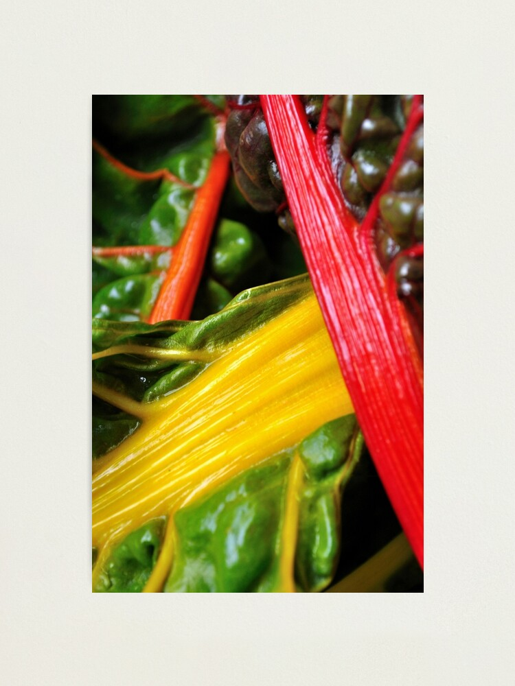 Alternate view of Colourful Greens Photographic Print